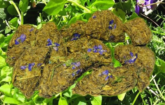 ein grünes Leckerlie mit violetten Blüten